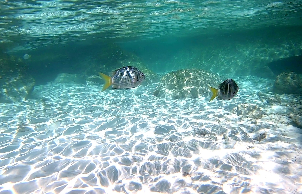 サンライズビーチ 海の中の様子 魚