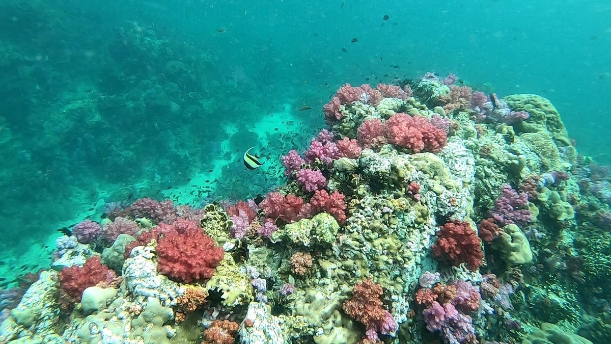 リペ島 シュノーケリングツアー サンゴ礁