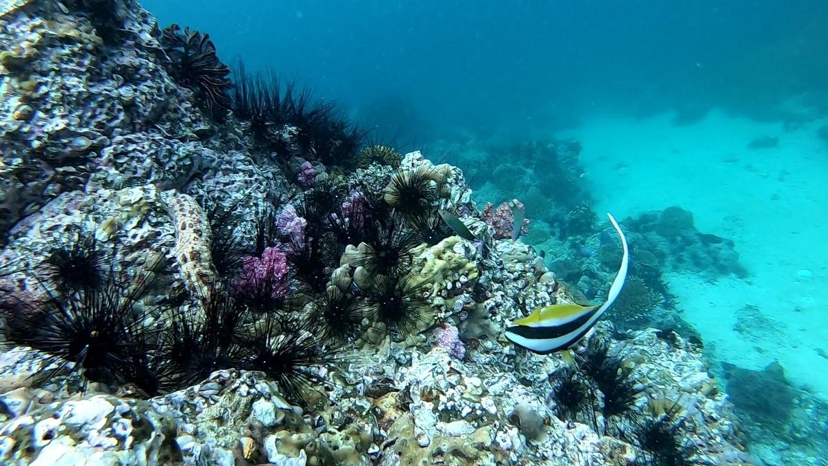 リペ島 シュノーケリングツアー 海の中の様子