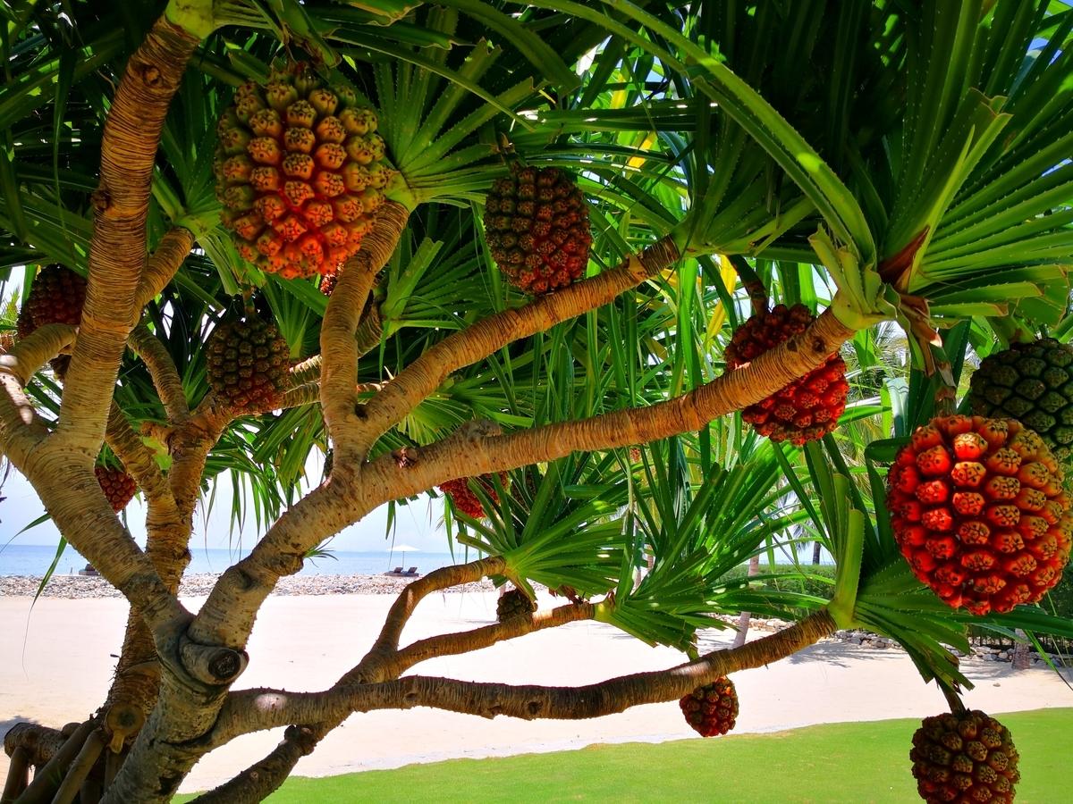 Mia Resort Nha Trang ホテル内の風景