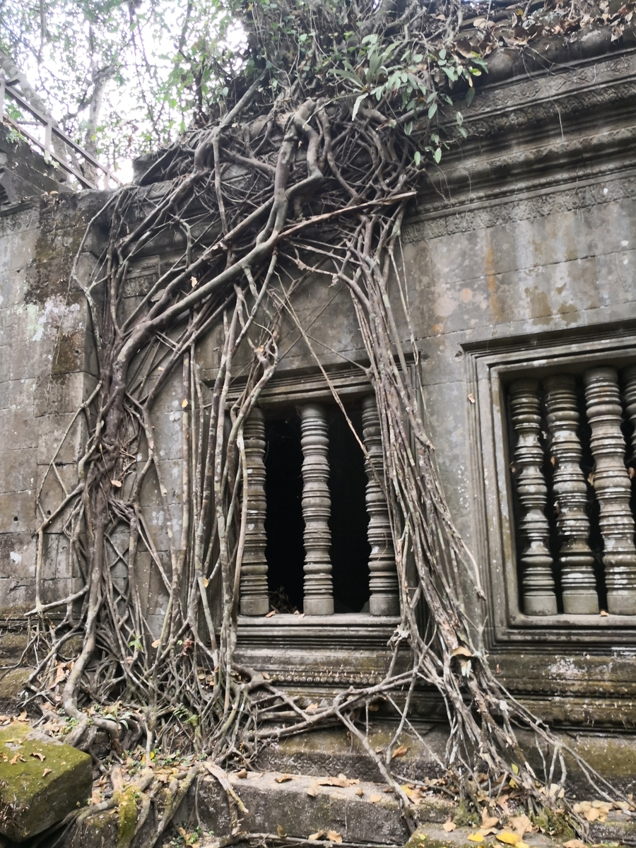 ベンメリア 遺跡 木の幹