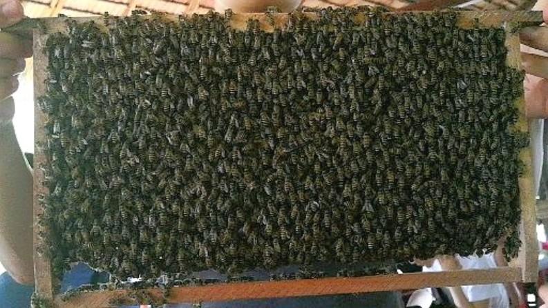 メコンデルタツアー 養蜂