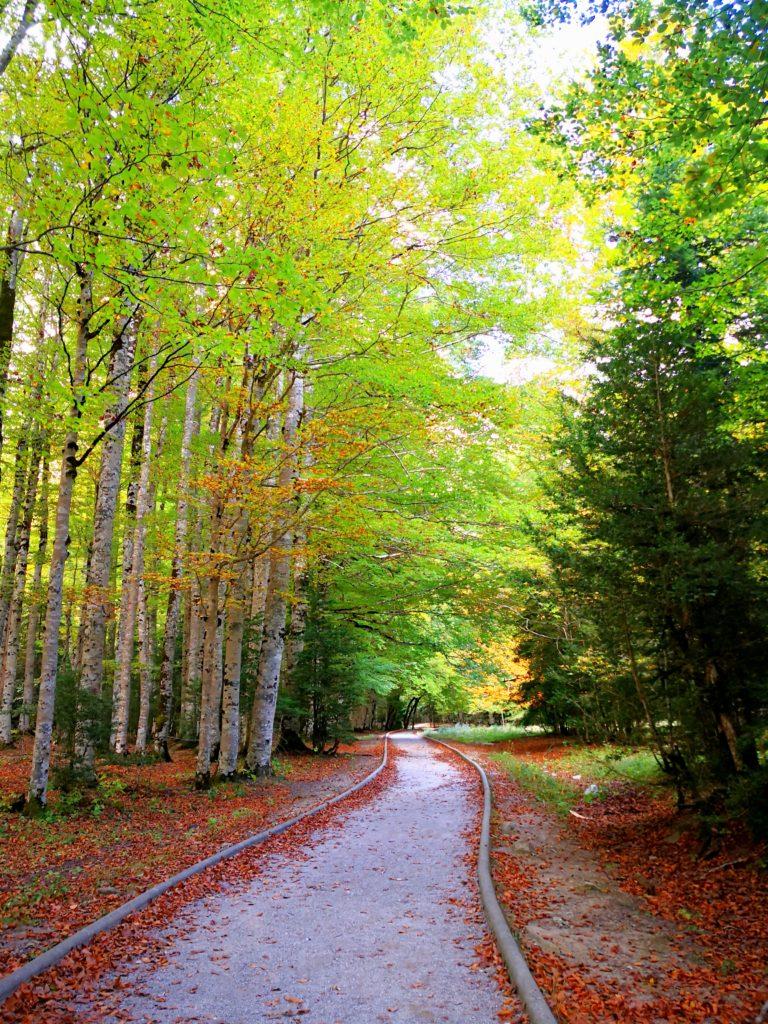 オルデサ・イ・モンテ・ペルディード国立公園 遊歩道 ブナの原生林